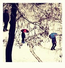Polaroid edited5 (vegeta25) Tags: park family blue winter red white snow playing tree weather happy fuji child play snowy path fujifilm umbrellas polaroideffect wintermoment myfuji s3200 52weeksthe2016edition 116picturesin2016 week62016 weekstartingfridayfebruary52016