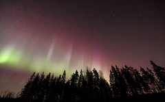 Red Auroras (Jyrki Liikanen) Tags: red sky silhouette stars march outdoor aurora serene redsky northernlights auroraborealis starrynight polarlights inthewoods polarnight auroras silhouettetrees northernbeauty northernfinland