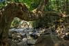 L'arbre (Clotilde DoSol) Tags: nature waterfall goa arbre inde tordu sonaulim