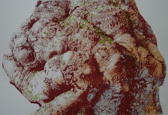 Moore- Ola Copper Beech (1024x699)