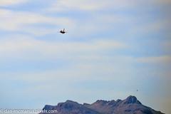 Thunderbirds, F-16 Falcon and a real Raptor by Twin Peaks (Kukui Photography) Tags: arizona tucson airshow thunderbirds davis usaf afb 2016 davismonthanafb monthan dmafb openhousedmafb