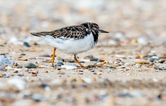 Turnstone on the way (The Rustic Frog) Tags: camera sea 2 wild bird beach nature digital canon walking lens eos coast seaside sand stones mark norfolk pebbles ii 7d 100400mm wader striding