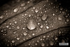 H41C3338-01 (joly_jeff) Tags: portrait paris canon noiretblanc hdr couleur pontneuf photographe poselongue eosmarkiii photosdeparis droitsréservés caisseaméricaine jeanfrançoisjoly jeffjoly equipeinteractivecom