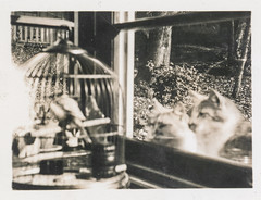 old white black bird birdcage window monochrome animal cat vintage found blackwhite antique snapshot cage photograph vernacular foundphotograph