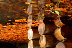 Contemplating on the water (RKAMARI) Tags: wood travel autumn red color fall nature water leaves closeup contrast reflections saturated warm colours zen serenity contemplative miksang bolu yedigller