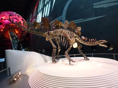 Stegosaurus Natural History Museum London Apr 2016 (symonmreynolds) Tags: london dinosaur april stegosaurus naturalhistorymuseum 2016