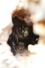 Abeilles Sauvages à V'île Fertile, photo par Philippe Boyer