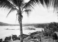 Chileno Bay, So. Baja, Mexico (arbabi) Tags: sunset nature landscape mexico sunsets pacificocean palmtree coastline bajacaliforniasur cabosanlucas backlighting seaofcortez sanjosdelcabo rockycoastline bajapeninsula chilenobay southernbaja loscaboscorridor chilenobayresort