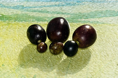 Olives (XPinger (Chris Sutton)) Tags: elements olives