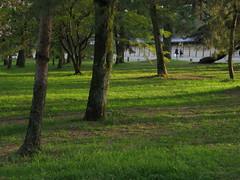 Silent of the Imperial park (hitsujida) Tags: city green town cannon    g9