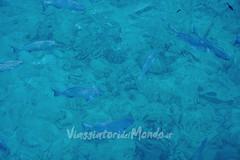 Bokissa Private Island (Viaggiatori del Mondo) Tags: coral private island mare pacific snorkeling laguna reef spiaggia santo pacifico privata isola espritu vanuatu oceania barriera corallina bokissa