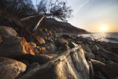 Forgotten coast (SimonMastersPhotography) Tags: ocean uk trees light sea wild storm sunrise golden coast rocks scenic nobody