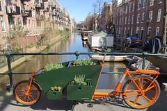 WorkCycles-Bloemenbakfiets (@WorkCycles) Tags: amsterdam bakfiets bakfietsen bike bloemen cargobike dutch flowers goudsbloemstraat grachten groen kr8 lijnbaansgracht orange planter plants workcycles