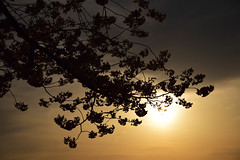 20160406_047_2 () Tags: silhouette