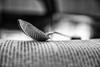 CIBO PER LA MENTE ...... (◕‿◕colpo d'occhio◕‿◕) Tags: libro lettura cibo mente cucchiaio