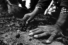 La Dureza del Campo B&N (anaruizroquetas) Tags: andalucia campo aceitunas olivos olivo aceituna campillos malga aceitunero