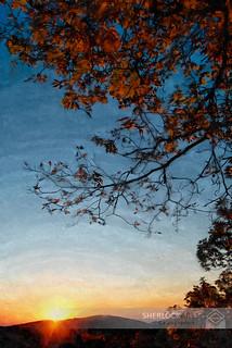 Fall Leaves at Sunrise- Blue Ridge Pkwy, 2011