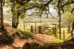 Devon landscape framed (Keith in Exeter) Tags: tree field wall rural fence landscape gate cattle cows outdoor farmland devon frame pastoral footpath grazing horsechestnut coutryside