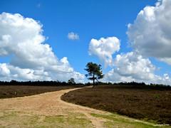 Landscape Forest (JaapCom) Tags: trees holland dutch clouds landscape heide landschap wezep wezepsche jaapcom