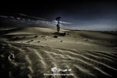 P  R  I  D  E (Obaid_Musabbeh) Tags: cloud tree beautiful beauty digital canon landscape photography dubai desert cloudy dunes fineart uae emirates 5d dxb markii mark2 1635mm qudra 5ds