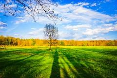 Landscape (skribblechris) Tags: park blue trees tree nature clouds landscape outdoors spring shadows bluesky treeline