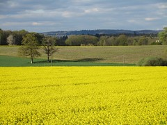 `. Envers (ricMon chemin ) Tags: plant tree nature yellow clouds canon landscape outside spring eu april avril printemps 87 colza 2016 hautevienne