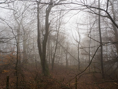 Misty Woods 1 [Explored 29.04.16] (nikkiashton922) Tags: trees mist misty fog woods derbyshire foggy