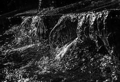Agua negra (Jess Barrera) Tags: plaza pink blue parque red summer sky espaa orange naturaleza green planta primavera blanco water azul vintage monocromo navidad high spain agua nikon torre monumento pastel negro flor fuente colores bougainvillea cielo alhambra granada espejo invierno range turismo alto aire libre hdr narciso diciembre cascada darro dinamico monocromtico dinamic macrofotografa rango realejo photomatix boganvilla floracin subexpuesta d5100