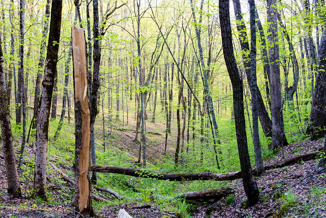 Hoosier National Forest - Martin Hollow Trail - April 25, 2016