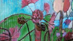 (cuattc) Tags: street flowers color seasons
