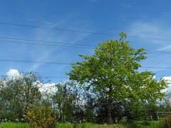 Blue sky (for once) (SamJWilsonPhotography) Tags: blue trees sky brown color colour tree green nature beautiful beauty grass clouds landscape wire focus wildlife branches sunny shades wires stump saturation greenery gras bushes waarm