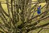 OF-Ensaiogestante-CamilaHenrique-564 (Objetivo Fotografia) Tags: family dog baby love pool girl hat sunglasses daddy mom ensaio kiss dad married photos amor carinho beijo mother kisses barriga sombra piscina pregnant família belly swimmingpool babygirl fotos cachorro future bebê neném abraço camila menina casal pai mãe mamãe vestido henrique papai sapato luísa chapéu nenê casados grávida fotografias beijos óculosdesol ensaiofotográfico engenheiro pregnantbelly gestação arquiteta sapatinho lajeado gestante vestidinho àespera ensaiogestante objetivofotografia camilaweibush esperandoluísa