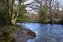 DSC_0020 (Lord Edam) Tags: winter nature water grass wales river stones walk wildlife betwsycoed conwy afon llugwy