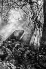 Vapor buscant la llum (bernat.rv) Tags: light sun luz sol water woods agua stones branches smoke bosque thermal humo vapour vapor piedras ramas termal fontpdrouse