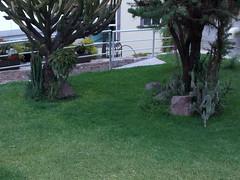 DSCN2504 (Alejandra Fajardo) Tags: flowers naturaleza 3 nature landscape mexico hotel la mujer plantas iii jardin paisaje escultura trendy chic suites reserva milenio qro bugambilia querataro