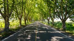 Llegando a San Rafael (Santiago Antonio Castro) Tags: road patagonia tree argentina ruta camino lg mendoza mobilephone rbol celular sanrafael android rute neuqun santiagoantoniocastro lgg4