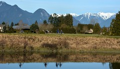 Cycling on the Pitt Meadows Dyke ( Peterson Photogr@phy  Happy 2016!!) Tags: dykes canada landscape cycling nikon britishcolumbia wetlands marsh pittmeadows alouetteriver pittpoulder pittriverdykes nikond5200 southarmalouetteriver nikonafs18140mmf3556edvr