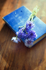 Blue book (borealnz) Tags: flowers blue table book pretty bunch cornflowers