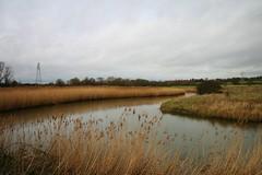 John Constable Trail, Essex, UK (lemonteajunkie) Tags: uk england sky plant field river reeds landscape countryside scenery wildlife horizon trail essex johnconstable