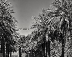 # #_ #_ # # #_ # # # #Palm #heritage # #old #hdr #blackandwhite #nature #landscape # # #cam #camera #sonyalpha #sony_alpha #Mountains #mountain # # # # (photography AbdullahAlSaeed) Tags: camera old blackandwhite mountain mountains heritage nature landscape cam palm hdr        sonyalpha