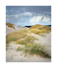 Dunes, Schoorlse duinen Netherlands. (Bert Vliegen) Tags: nature netherlands nederland duinen kodakektachromee100vs schoorlseduinen d4000 chamonix45n2 rodenstocksironars180mm