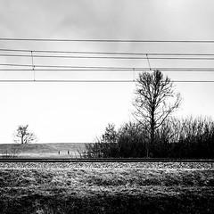 (Nico_1962) Tags: leica bw lines landscape zwartwit nederland thenetherlands summilux buiten landschap lijnen leicaq