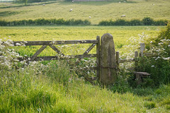 Seasons (Lancashire Lass ...... :) :) :)) Tags: summer green grass june fence countryside gate sheep meadow lancashire fields stile hedgerow cowparsley ribchester ribblevalley