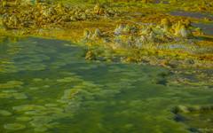 Danakil waterlilies (farflungistan) Tags: green yellow landscape volcano sulphur ethiopia naturalwonder saltplains 2016 2015 dallol danakildepression neonlandscape