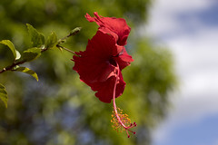 Flower of Gran Sabana (mstoecklin) Tags: flower gran sabana