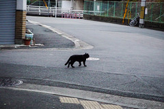 Today's Cat@2016-02-04 (masatsu) Tags: cat pentax catspotting mx1 thebiggestgroupwithonlycats