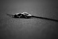 (omarpappi) Tags: blackandwhite bw white black blancoynegro monochrome 35mm photography mono monocromo photo blackwhite nikon day mare noiretblanc minimal bianco nero notturna spiaggia minimalist biancoenero nwn monocrome photographyart d300 123bw nikond300 nikonflickraward minimalbw minimalistbw minimalismobw