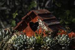 Red succulent birdhouse (julesnene) Tags: california red succulent backyard heart birdhouse wreath ourgarden homesweethome julesnene succulentwreath juliasumangil canonef100mmf28lmacroisusm canon7dmarkii canon7dmark2