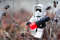 Le steppe di Endor (theofficialcarena) Tags: trooper macro star nikon lego luke scout lucas micro wars nikkor lukeskywalker starters georgelucas