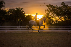 Sunset with horse (GMatamorosR) Tags: light sunset horses horse luz atardecer caballos licht sonnenuntergang honduras pferde pferd
